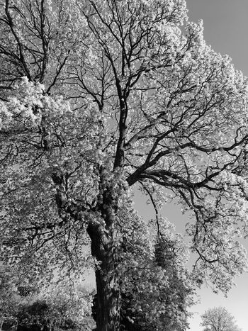 Tree Nature Growth Beauty In Nature No People Day Springtime Outdoors Black And White Norway