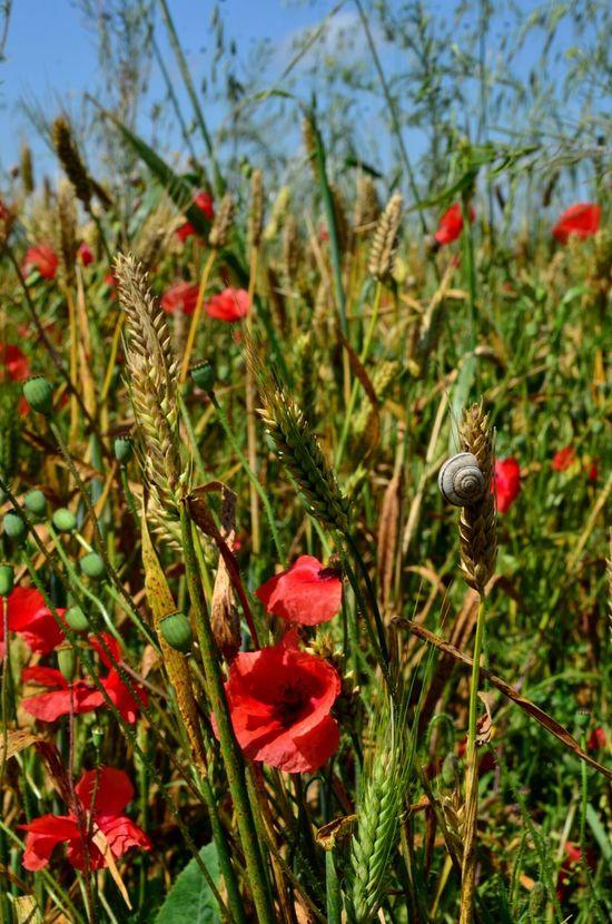 Kislovodsk Russia Flowers