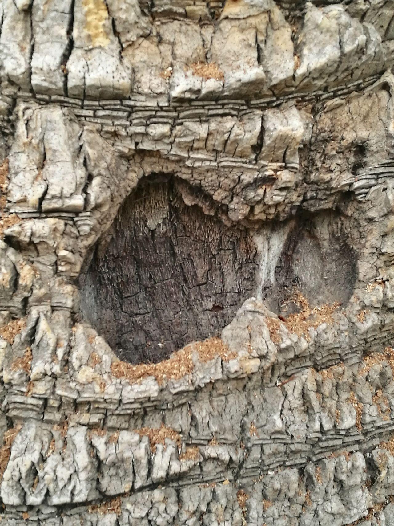 Tronco Palmeras Palm Tree