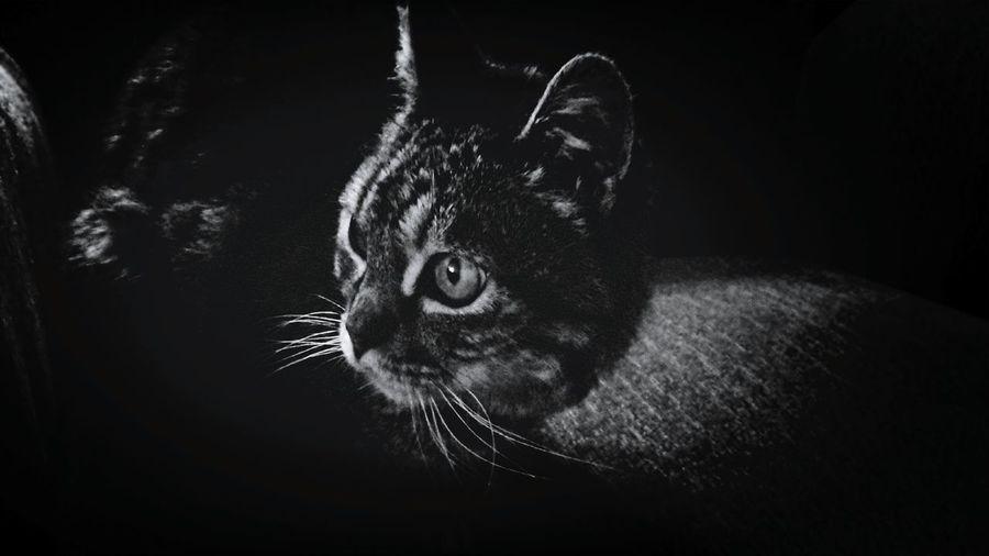 El misterio tiene forma, es un gato. Black&white Cat