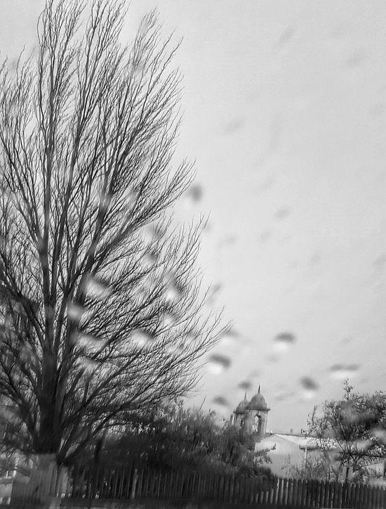 """Llueve Trees Invierno Showcase: December Samsung Galaxy S6 Edge Samsungphotography Bnw_captures Bnw_shot My Best Photo 2015 Bnw_collection """" Las gotas de lluvia horadan la piedra no por la violencia, sino por la caída constante."""" Lucrecio"""