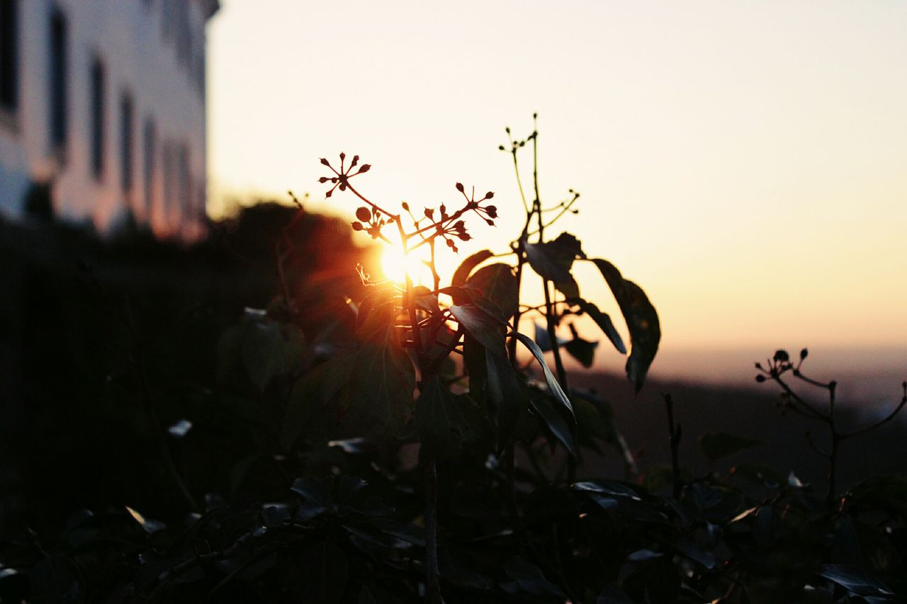 Sunset Plant Close-up Sunbeam Sunlight Silhouette Nature No People Outdoors Ant Beauty In Nature Agriculture Day