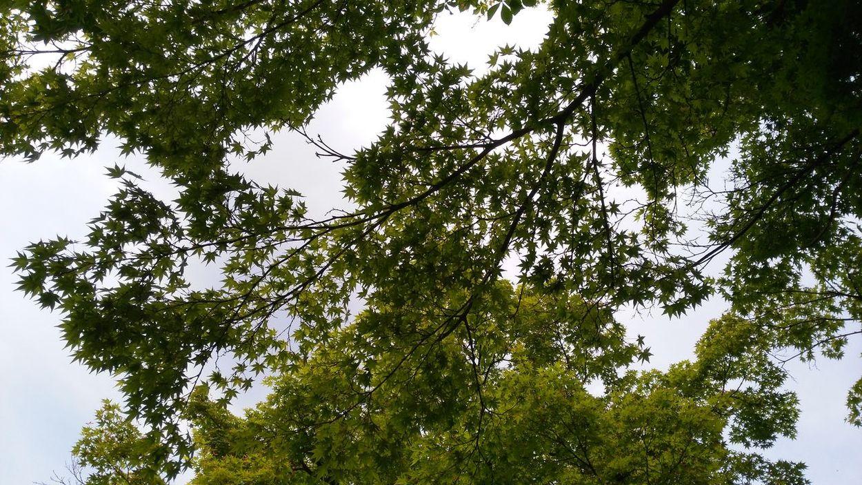Heart Sky Cielo Piante Thebestview