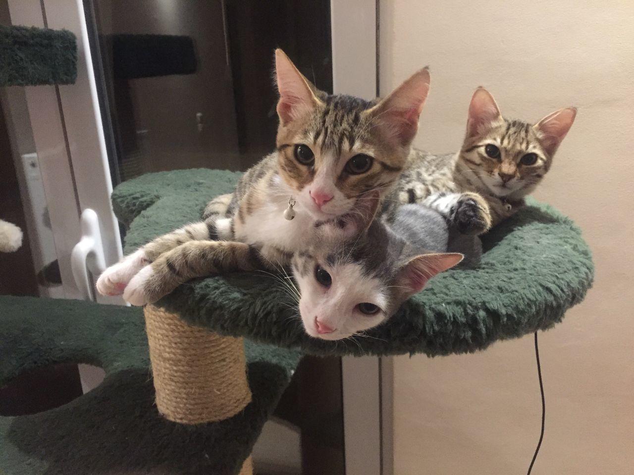 Domestic Cat Domestic Animals Pets Animal Themes Mammal Cat Babycat Looking At Camera