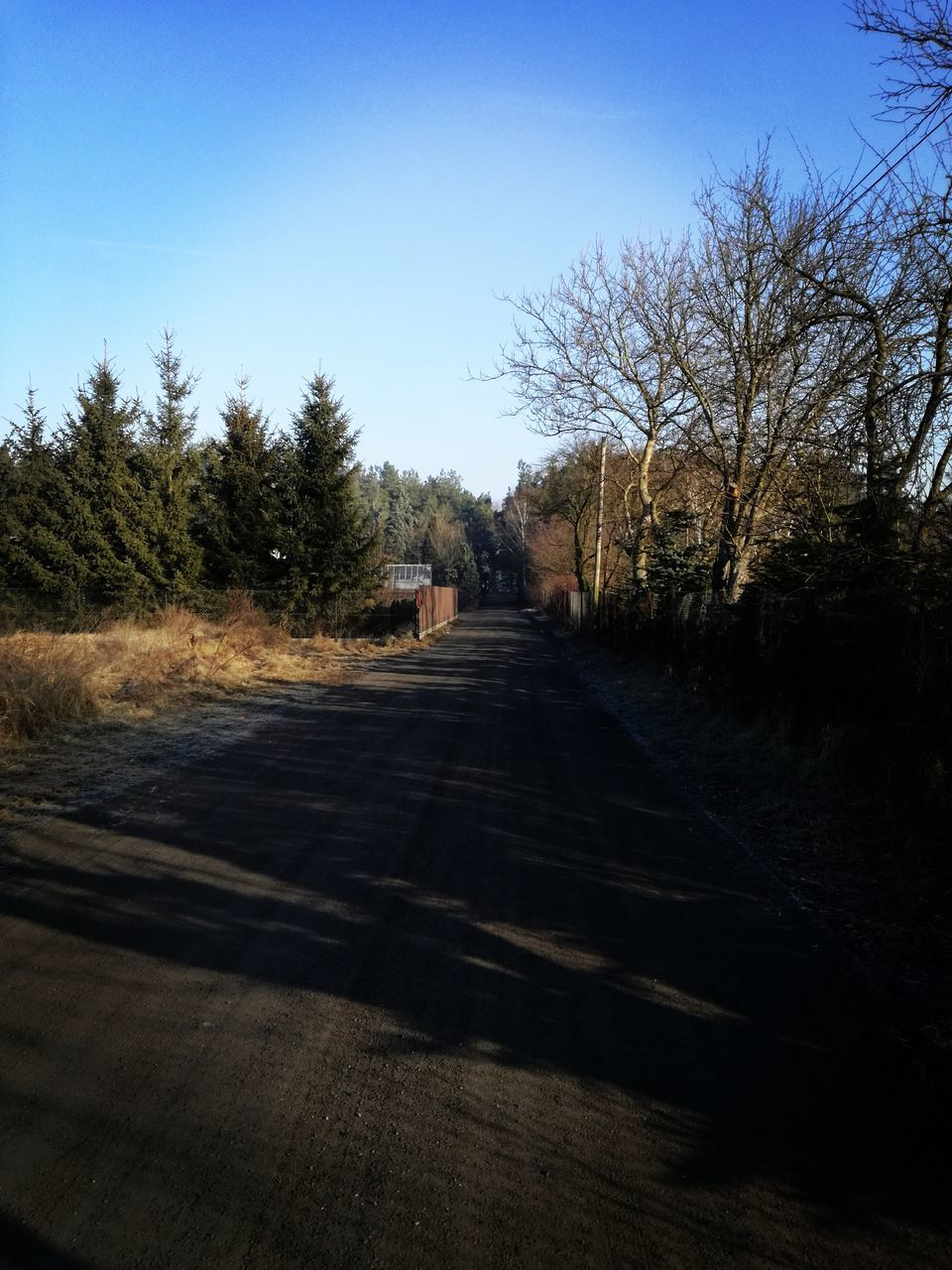 tree, the way forward, clear sky, road, sunlight, day, nature, outdoors, shadow, tranquility, no people, landscape, sky