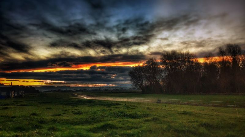 Sunset Grass Nature Beauty In Nature Scenics Field Tranquil Scene Tranquility Landscape Sky Cloud - Sky Dramatic Sky No People Outdoors Growth Tree Rural Scene Scenery Day