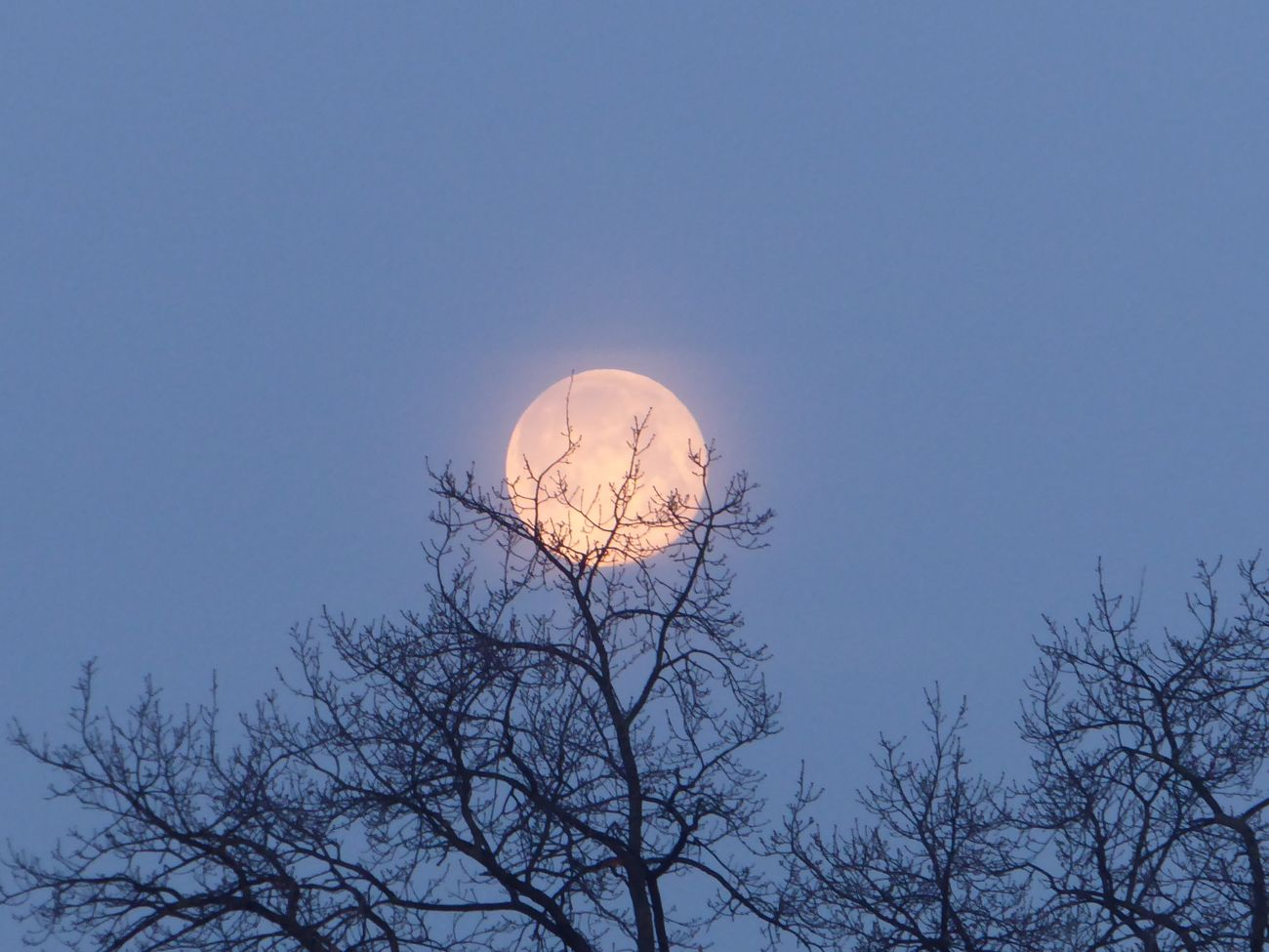 Full Moon In The Morning Tranquility Bare Tree Beauty In Nature Enjoyinglife  For My Friends 😍😘🎁 Tranquility Beauty In Nature Nature Morningviews Looking Up😍 Silhouette Photography