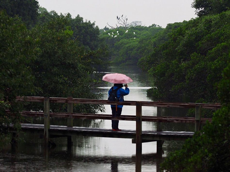 Railing Rear View Tree Footbridge Nature Water Outdoors One Person Beauty In Nature Day Sky Wetland Stream Woman With Camera Woman With Umbrella Birds Snap a Stranger Mai Po Nature Reserve Rainy Days Light And Shadow Olympus OM-D EM-1 Nature Cloud - Sky Animal Themes Group Of Birds
