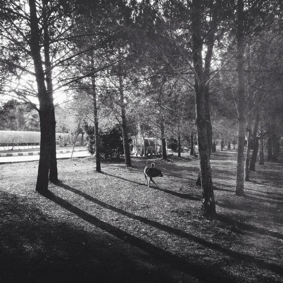 Taking Photos Black & White