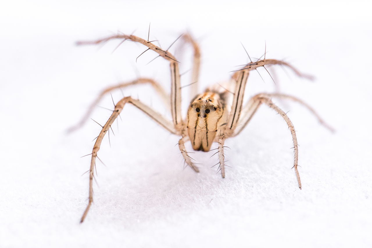 My model today: A little spider Arthropod Close-up Eyes Legs Look At Me Multi Eyes Spider