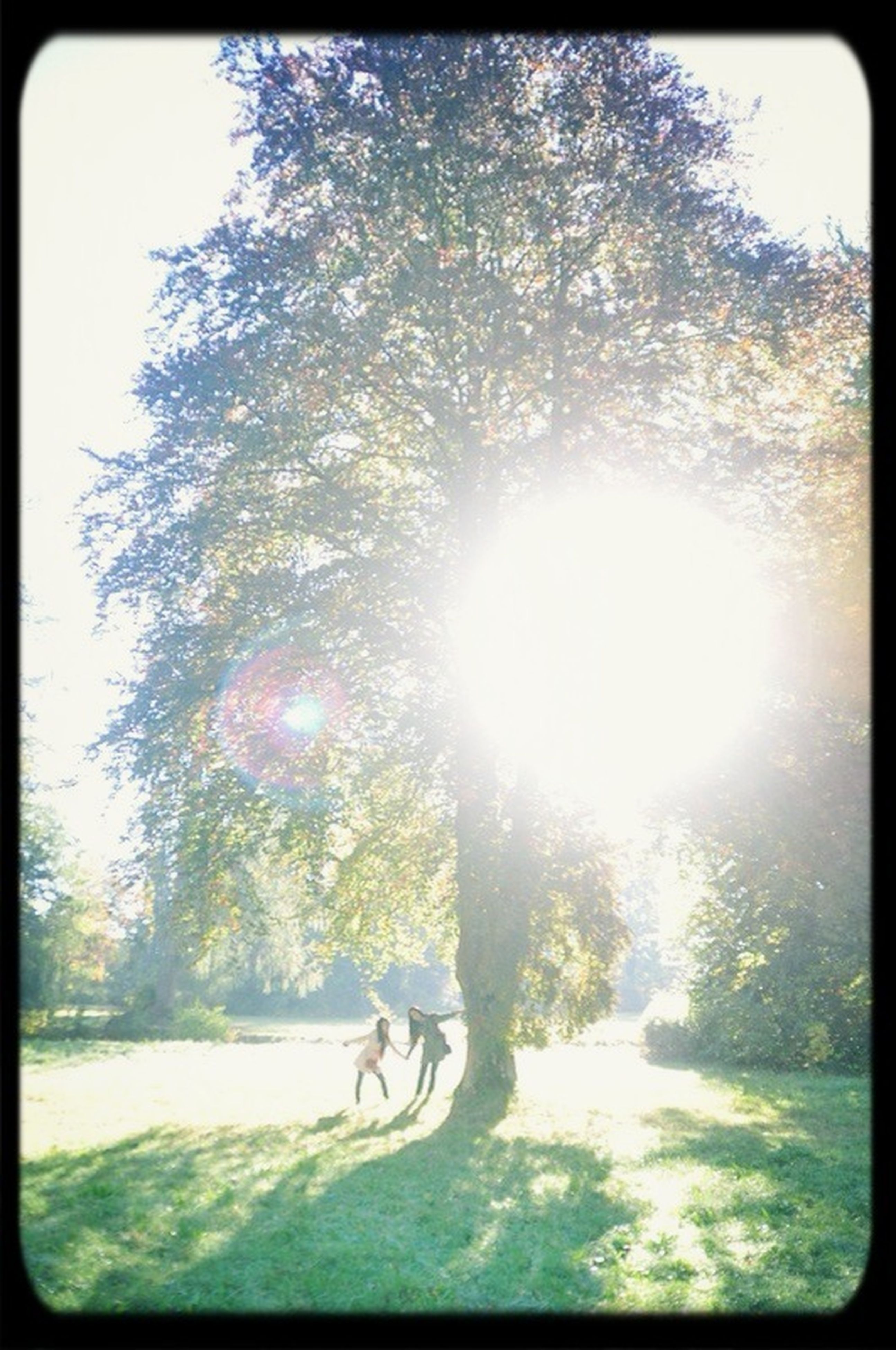 transfer print, auto post production filter, tree, sunlight, sun, sunbeam, lens flare, low angle view, growth, nature, beauty in nature, branch, tranquility, day, sky, outdoors, sunny, no people, clear sky, bright