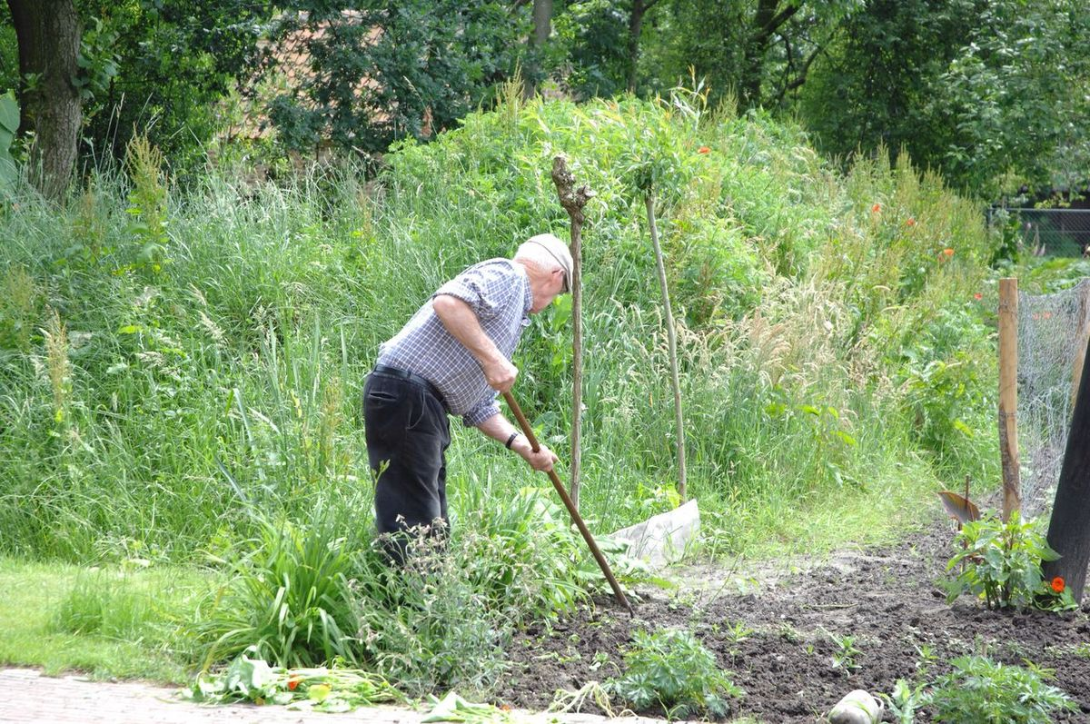 Gardening Portrait Old Man Working Outdoor Photography Landscape In The Garden Nature People And Nature Sunny Afternoon Doing Things Garden Work