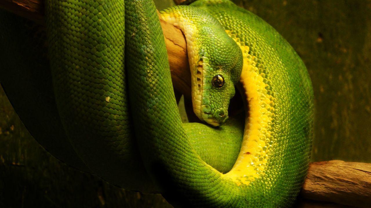 Close-up Details Animals One Animal Tiere Schlange  Grün Snake Foto Fotografia Fotography Fotografie Photo Photography Photooftheday Photographer First Eyeem Photo