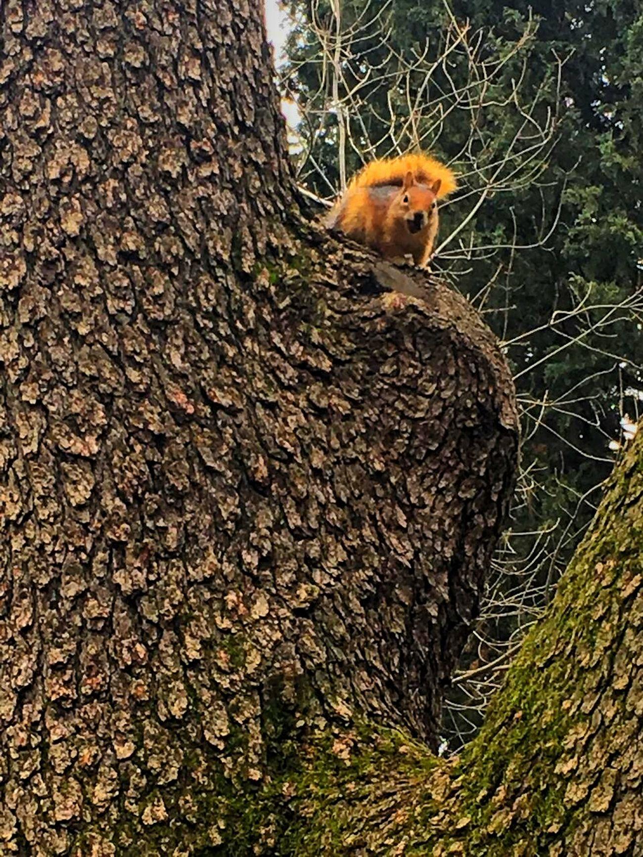 Turkey ıstanbul Besiktas Yıldız Parkı Sen Ne Yapıyon Ya Orada Squirrel 😚