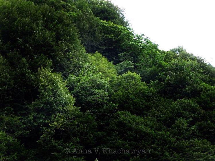 Dilijan Armenia Summer Nature