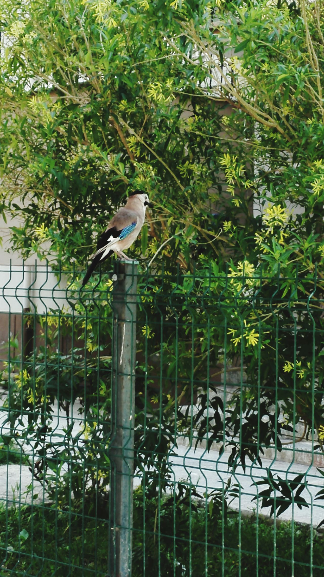 Doğa Huzur Yeşil Renk Ahenk Kus Asalet Kuşadası Türkiye