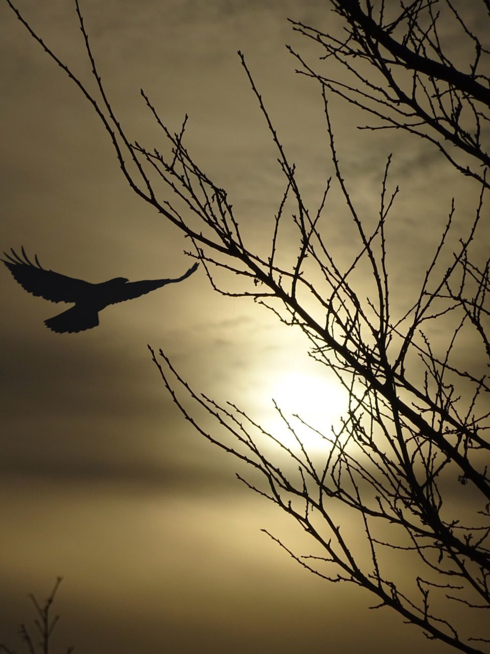 nature, silhouette, sky, low angle view, beauty in nature, sunset, tranquility, bird, no people, outdoors, tranquil scene, cloud - sky, branch, animal themes, bare tree, flying, animals in the wild, scenics, tree, spread wings, day