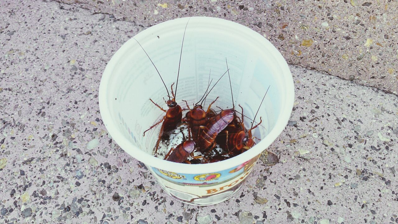 AllCreaturesGreatAndSmall Cup Insekten Becher Cockroach Cockroaches Kakerlaken Insects  Insect Photography Insekten
