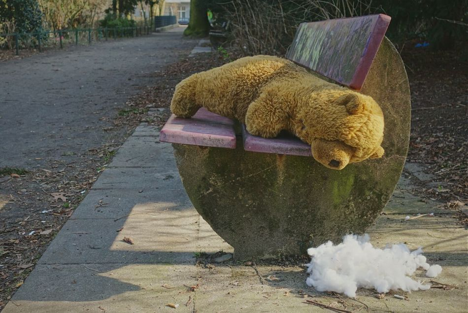 Beautiful stock photos of teddy bear, Abandoned, Absence, Bench, Berlin