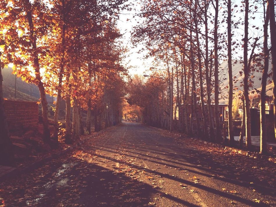Beautiful fall morning Autumn Trees