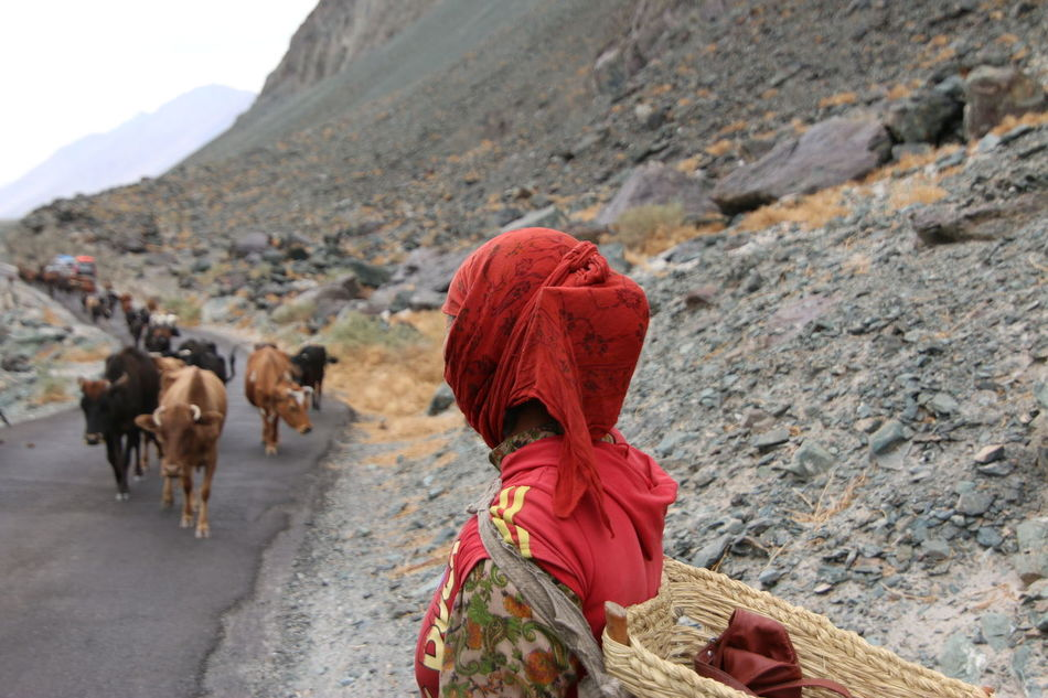 The Journey of Life Cold Desert Cold Desert India Day Domestic Animals Livestock Mammal Men Mountain Nature One Person Outdoors People Real People Rear View The Living Walking Women