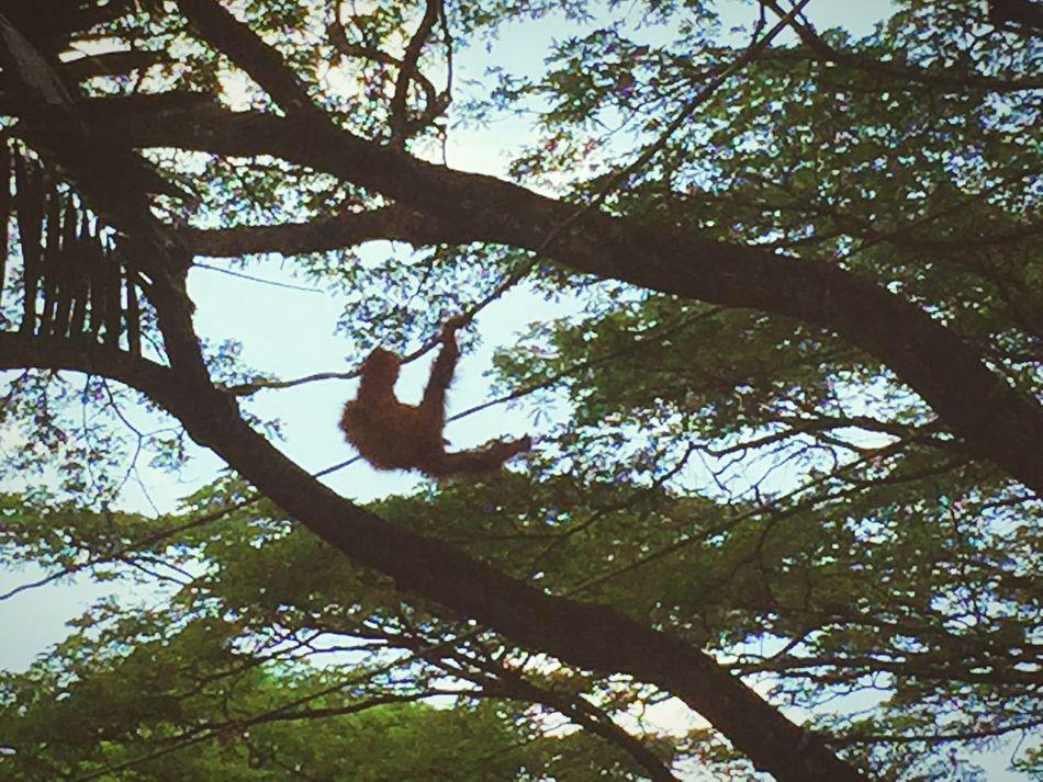 Singapore Singapore Zoo Monkey Have Fun Tour Singapore Tourist Journey Feel The Nature Feel The Journey