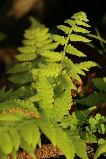 Spring Time Fresh Green Leaves Green Color Plant Nature No People Leaf Growth Close-up Beauty In Nature Fern Outdoors Freshness