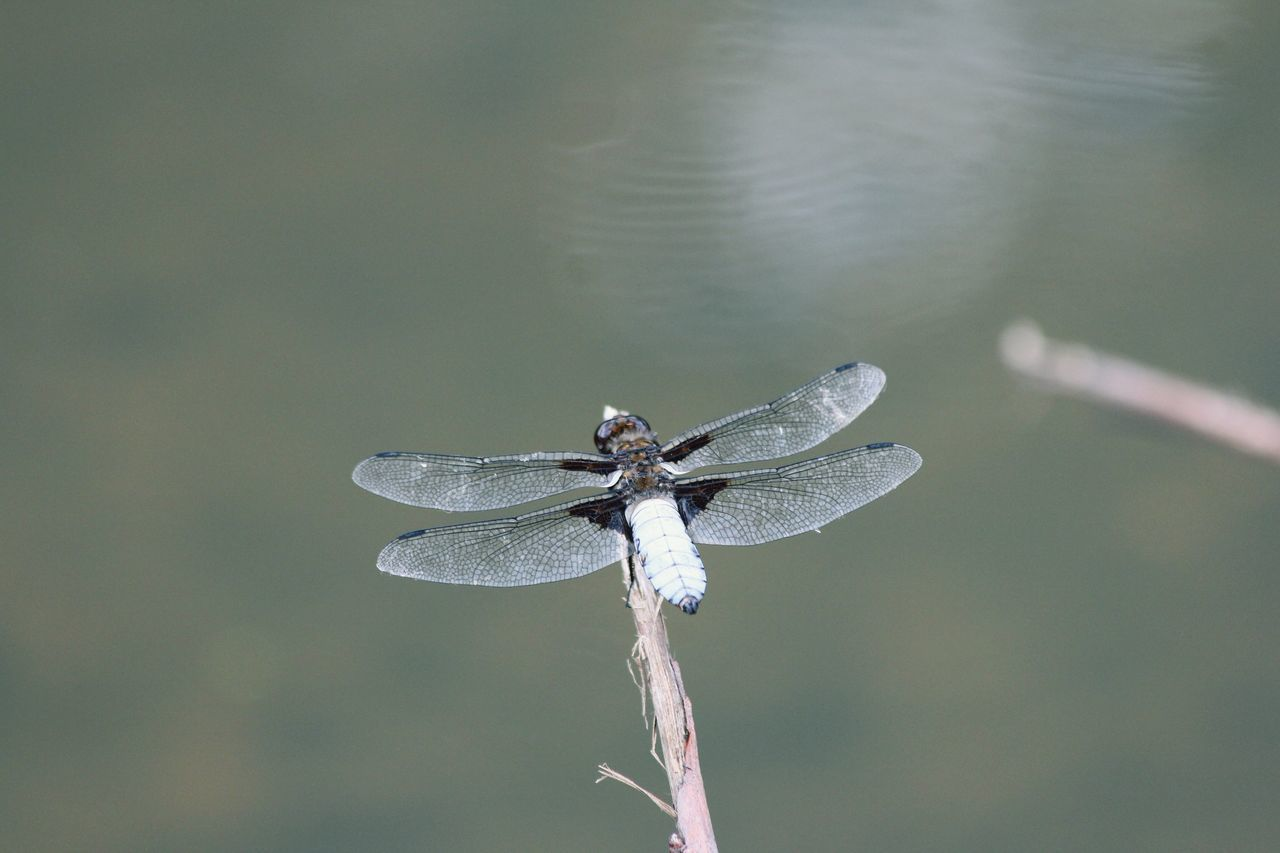 Just a dragonfly Bodensee Walking Around Taking Photos From My Point Of View Tadaa Community Lakeconstance Dragonfly Libelle EyeEm Nature Lover Nature_collection