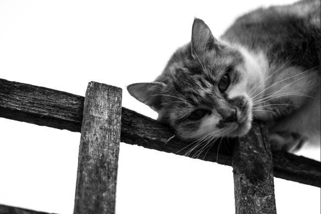 Cat Blackandwhite Animals Cats Black And White