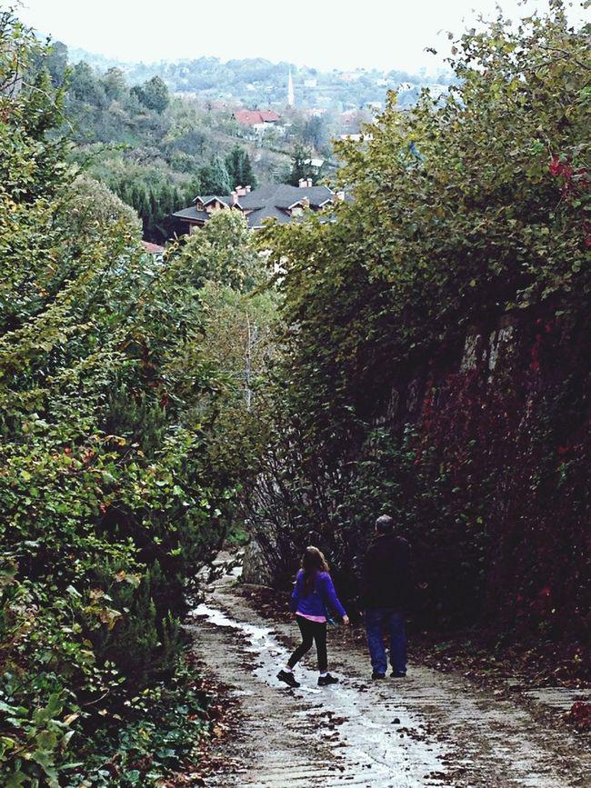 Autumn Mountains Green Nature