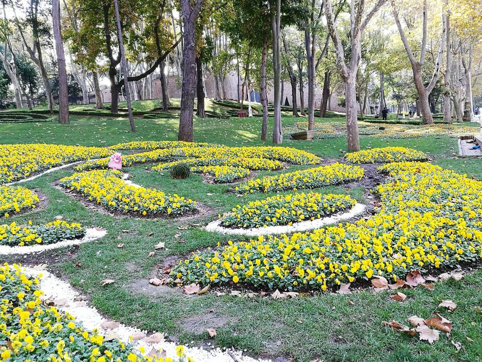 Yellow Growth High Angle View Turkey♥ Türkiye 💙💛 Istanbulstreetphotography Turkeyphotooftheday✪ Turkey💕 Istanbul, Turkey Istanbul Park Circuit Istanbul Park Tree Outdoors Flower Tree Grass Green Color Growth Nature Beauty In Nature Sunlight Day No People Nature Close-up