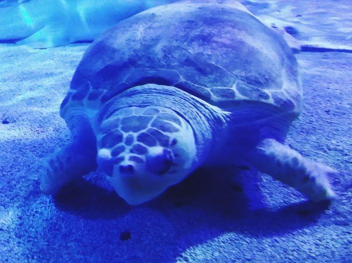 Sea turtle Animals In The Wild Animal Wildlife One Animal Underwater Sea Life Sea UnderSea No People Animal Themes Swimming Aquatic Mammal Close-up Nature Mammal Water Day Outdoors
