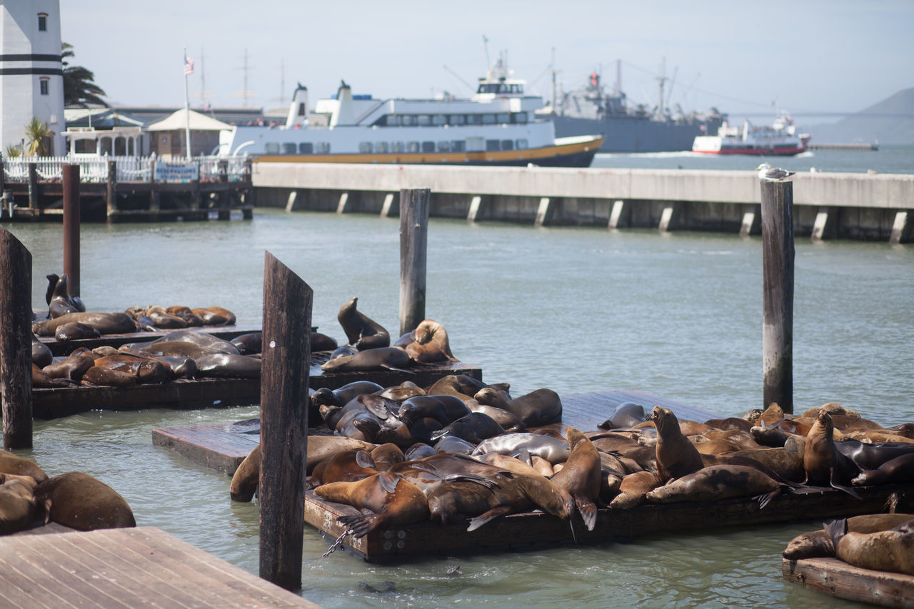 Beautiful stock photos of san francisco, Animal Themes, Animals In The Wild, Day, Famous Place