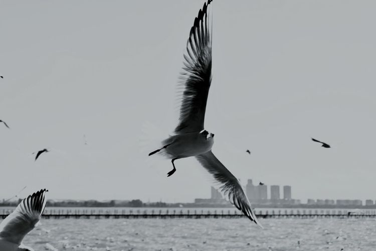 Flying Bird Spread Wings Animal Wing Mid-air Water Animal Wildlife Sky Lake Nature Outdoors Day No People
