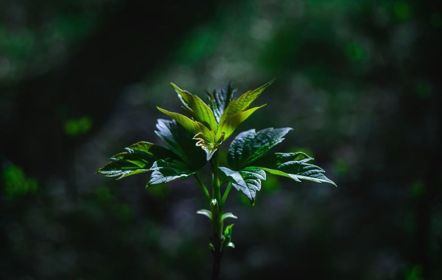 Center Beauty In Nature Green Color Springtime Beauty Leaf Nature Plant Social Issues Outdoors Flower Head Fragility Plant Part Rural Scene Herb Our Best Pics Eyeem Photo From My Point Of View By Ivan Maximov Nature Lover Great Outdoors Tranquility Relaxing Belarus Nature In Forest