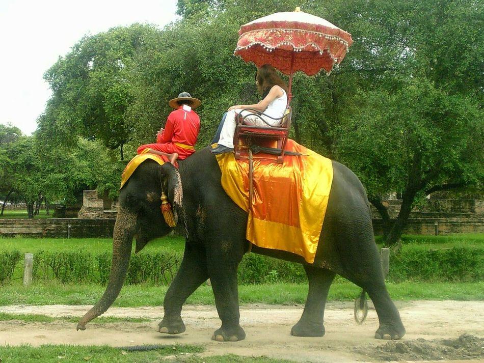 Elephant Trekking Elephants Tour Elephant Ride