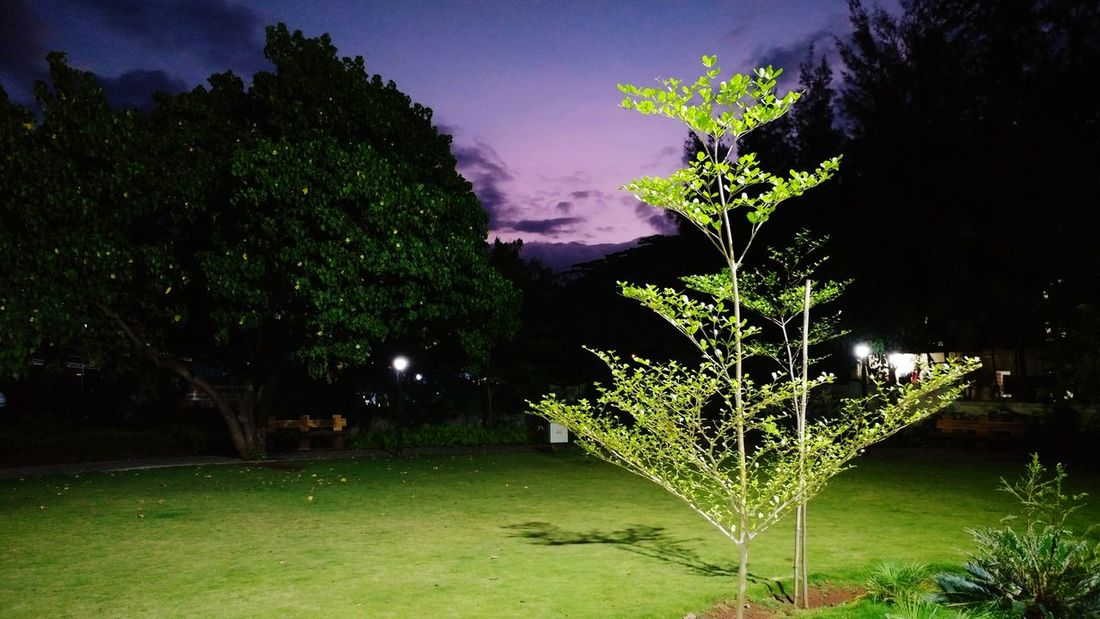 Mother Earth is very beautiful. Save her... Go Green Feel Green Tree Tranquil Scene Illuminated Scenics Sky No People