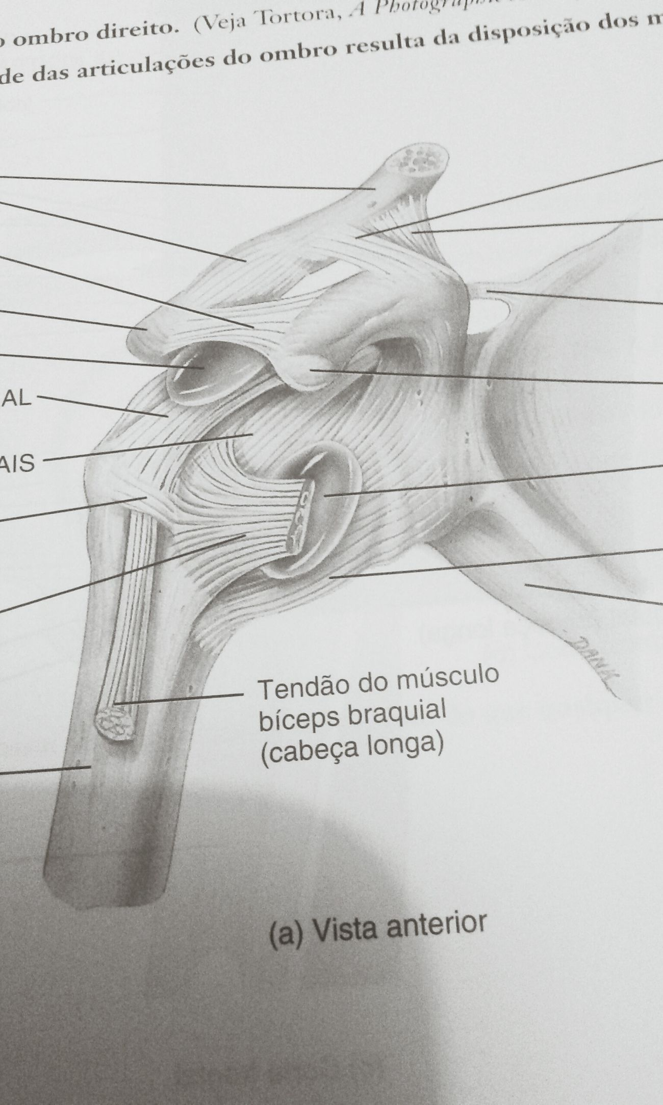 Fisioterapia ❤ AnatomiaDaDepressao Fisiolove