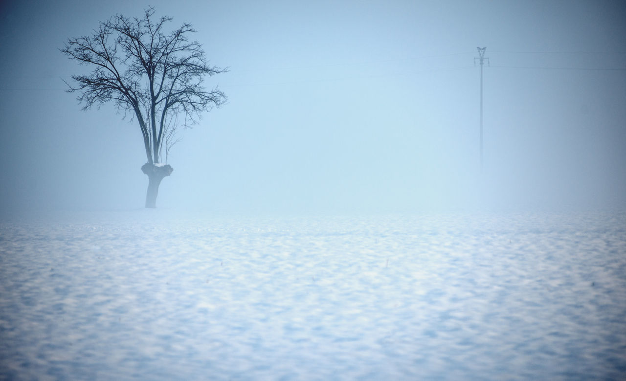 Bare Tree Beauty In Nature Blue Clear Sky Cold Temperature Day Isolated Landscape Lone Nature No People Outdoor Photography Outdoors Sky Snow ❄ Tranquil Scene Tranquility Tree Tree In Snow Winterevening Wintertime