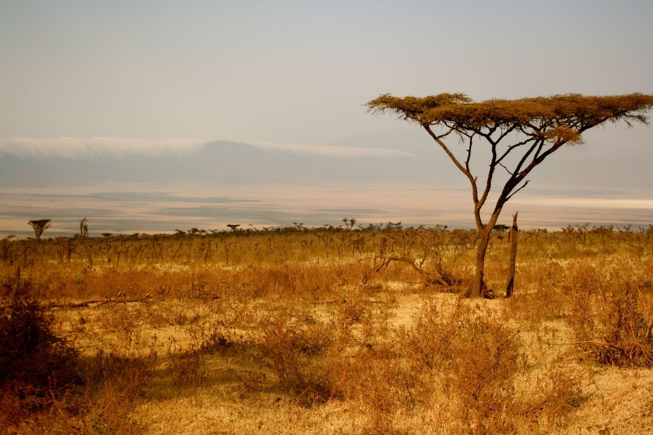 Life in the crater! Nature Tree Beauty In Nature Scenics Sunset Growth Outdoors Landscape Tanzania Tranquility Silhouette Tranquil Scene Sky Single Tree Ngorongoro Crater Africa Safari Boab Tree Wildlife Landscape Photography