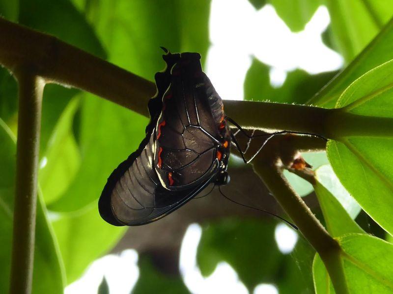 Butterfly Insect Photography Nature Photography Zoo Antwerpen Vlindertuin Vlinders Natuurfotografie