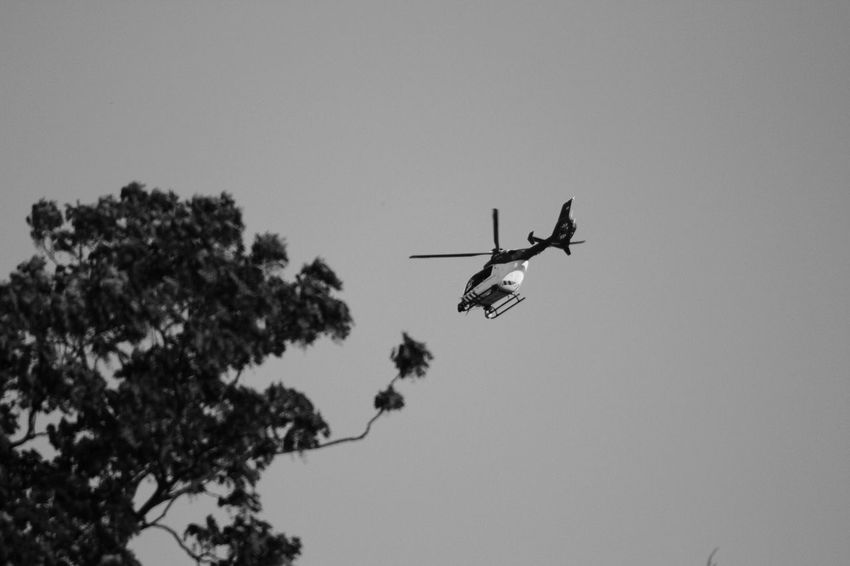 Flying Air Vehicle Helicopter Low Angle View Military Mid-air Day Tree Outdoors Airshow Military Airplane Sky People Police Helicopter EyeEmNewHere Monochrome Photography The Street Photographer - 20I7 EyeEm Awards WeekOnEyeEm Eyeemphotography The Photojournalist - 2017 EyeEm Awards Live For The Story
