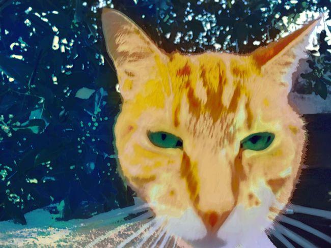 Cat Chat Cat♡ Catfie CHATFIE