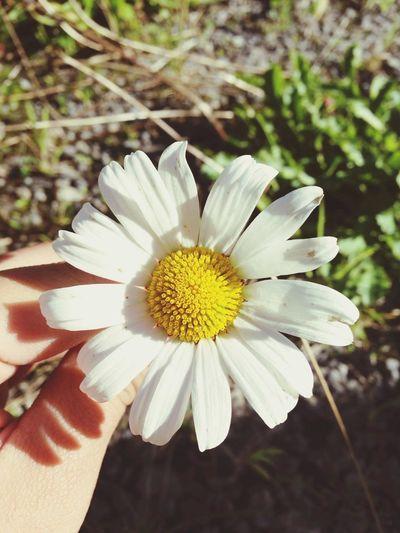 Flower Sunflower Cute Loveit