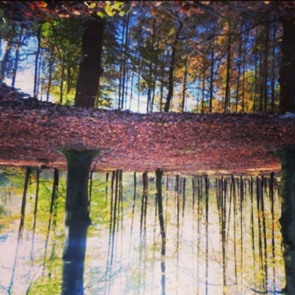 Abstract Perspective Reflections Upsidedown Forest Tree Colour Netherlands Insta_netherlands Instamood Desserted Peaceful