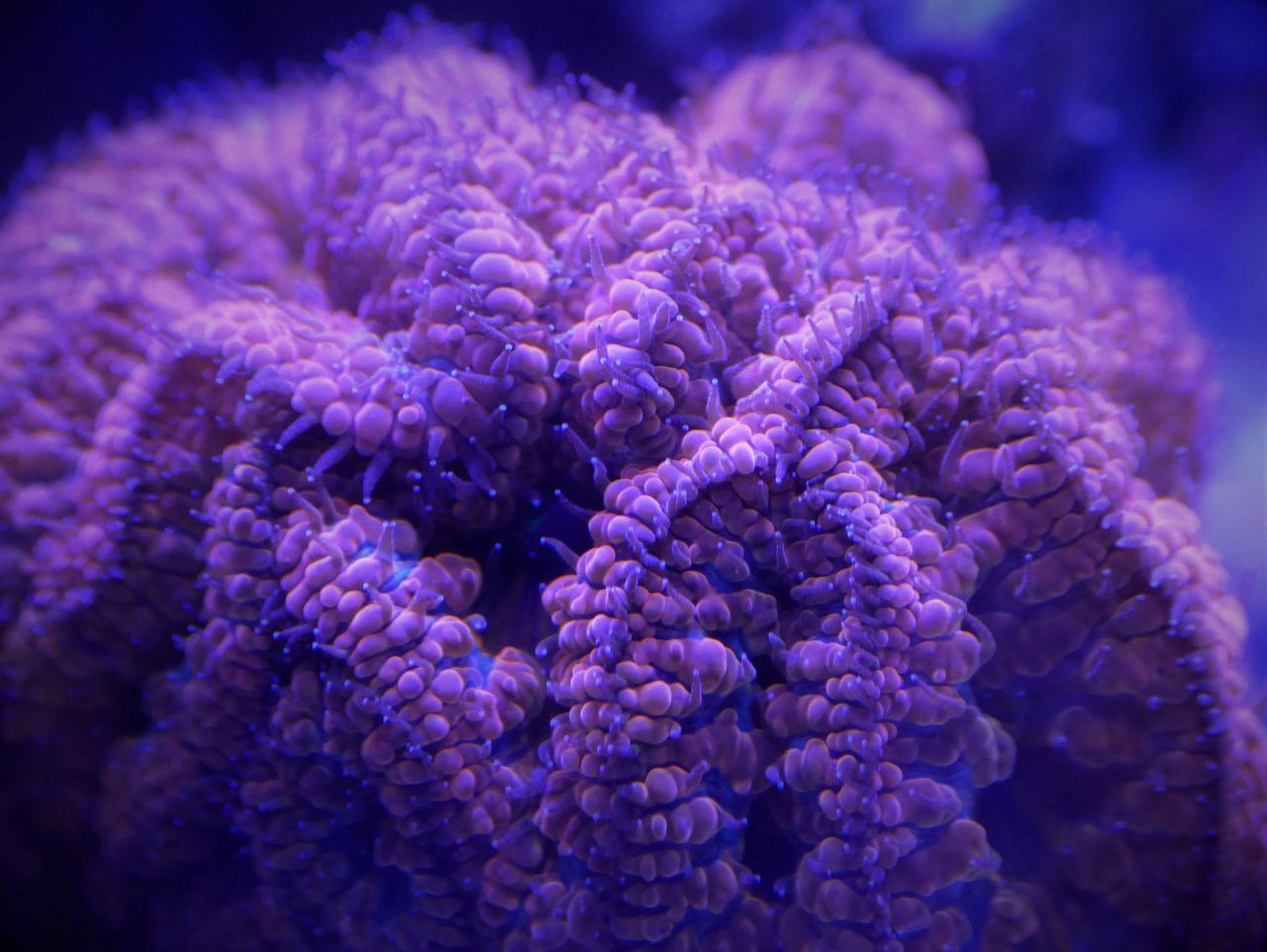 Beautiful stock photos of blau, Close-Up, Coral, Ecosystem, Focus On Foreground