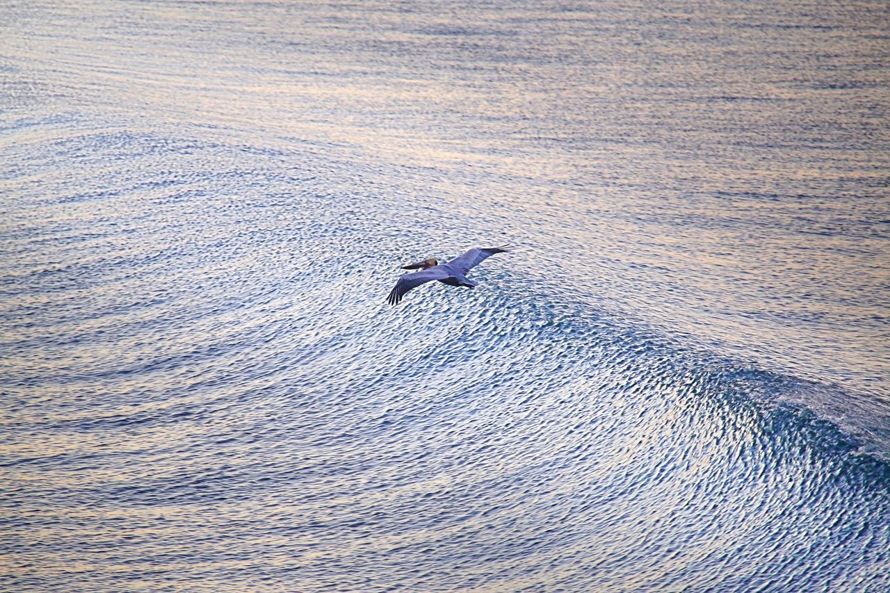 Animal Themes Animal Wildlife Animals In The Wild Beauty In Nature Bird Day Early Morning Nature No People One Animal Outdoors Pelican Pelican In Flight Rippled Water Sea Sea Life Water Waterfront