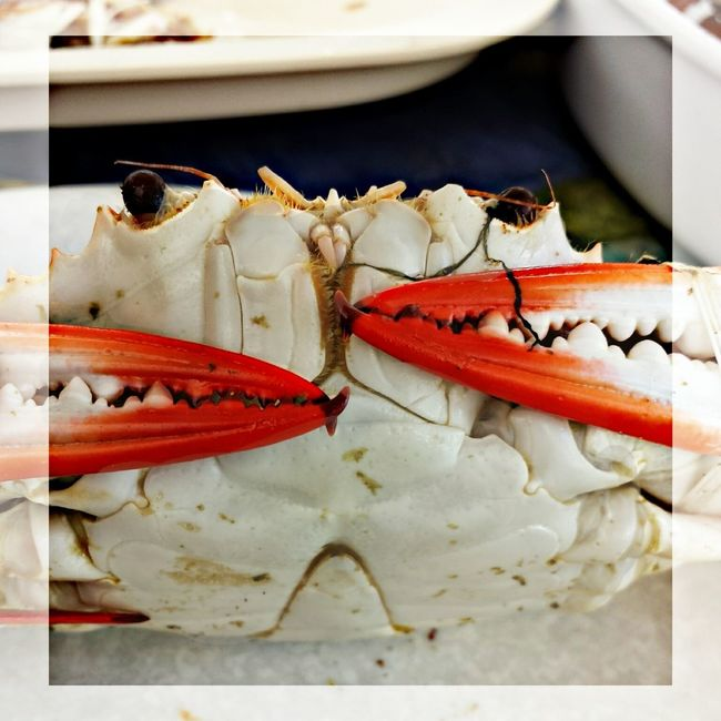 mr. crabby is my bestfriend. my lover.