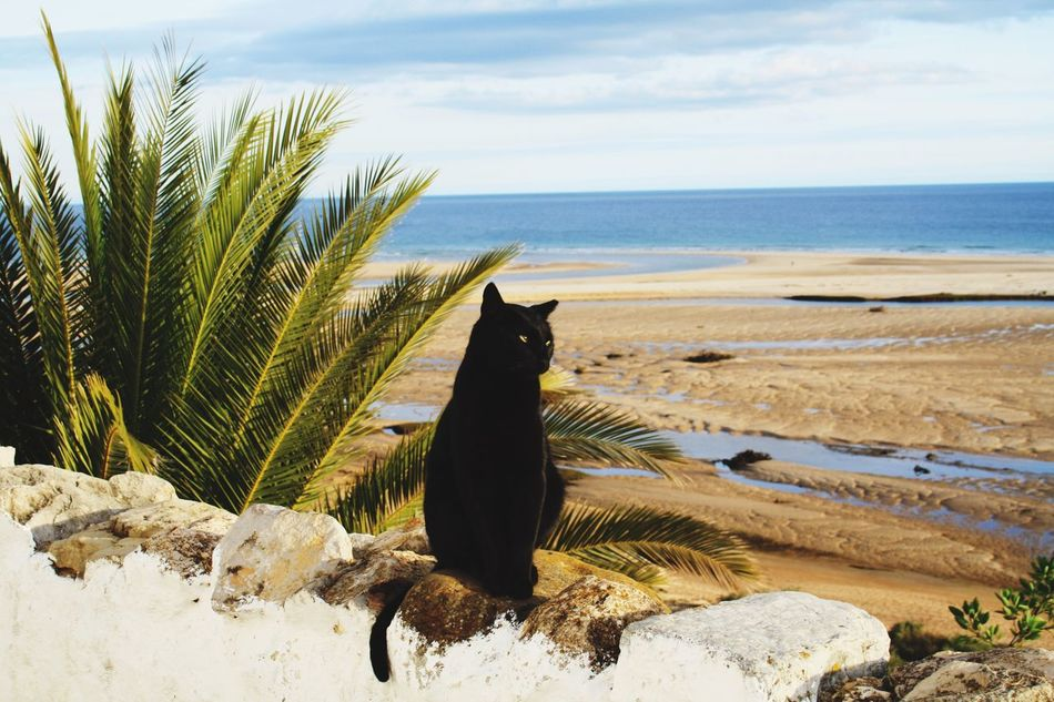 Beautiful stock photos of palm tree, Animal Themes, Beach, Beauty In Nature, Black Color