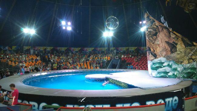 Circus 😚